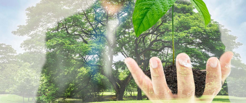 Grow-Leader Wachstumspfad - Leadership Mentoring von weEmpower